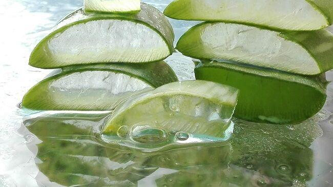 Aloe vera: kívül-belül gyógyír