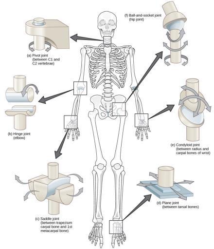 a térd ligamentitisz ligamentumának gyulladása)