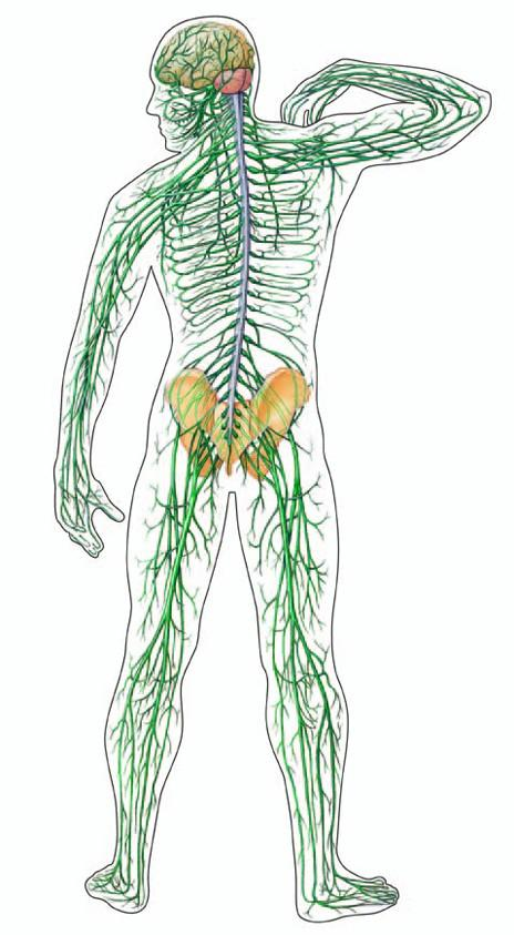 ulnaris idegkárosodás a könyökízületnél
