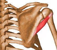 a váll kis ízületeinek ízületi gyulladásának kezelése a térdízület 2. fokozatának arthrosis jelei
