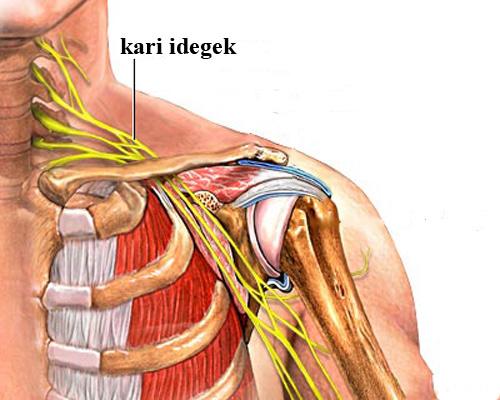 nyak és vállfájdalom lelki okai)
