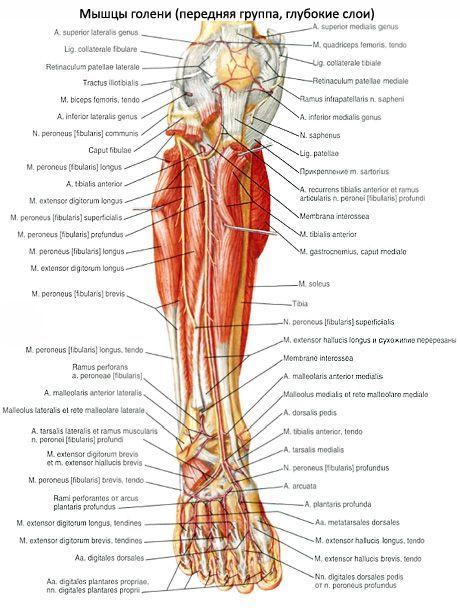 fájdalom a láb bokaízületeiben)