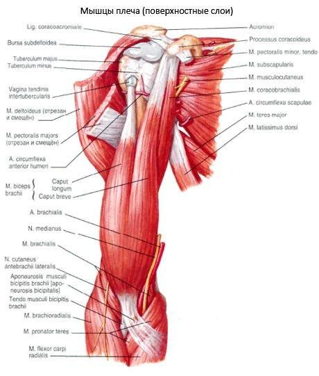 2. szakasz deformáló artrosis a vállízületben