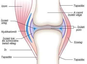 ajánlások az artrózis kezelésére