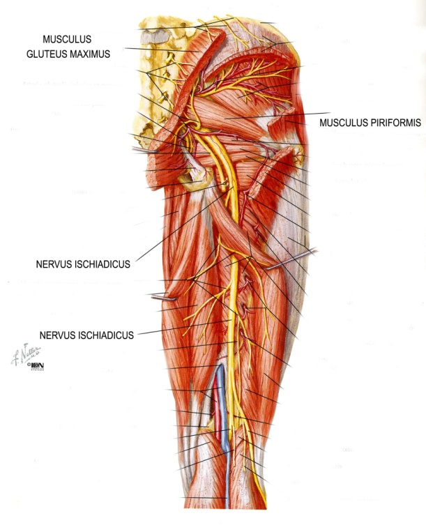 fájdalom a csípőízület idején)