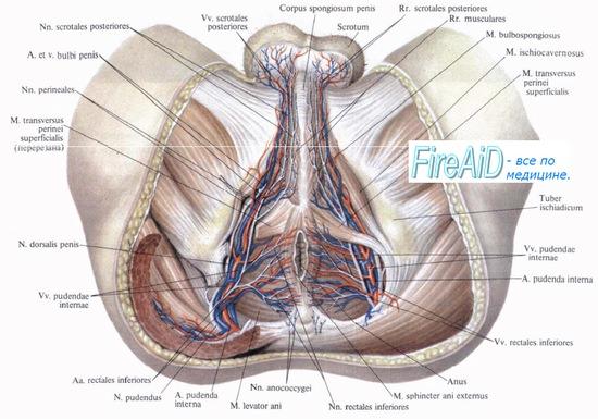 a térdízület oldalsó ligamentuma)