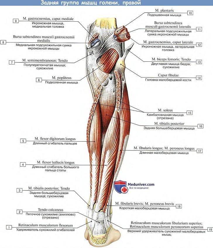 fájó láb sarok és a hát alsó része hogyan lehet kezelni az ízület gyulladását