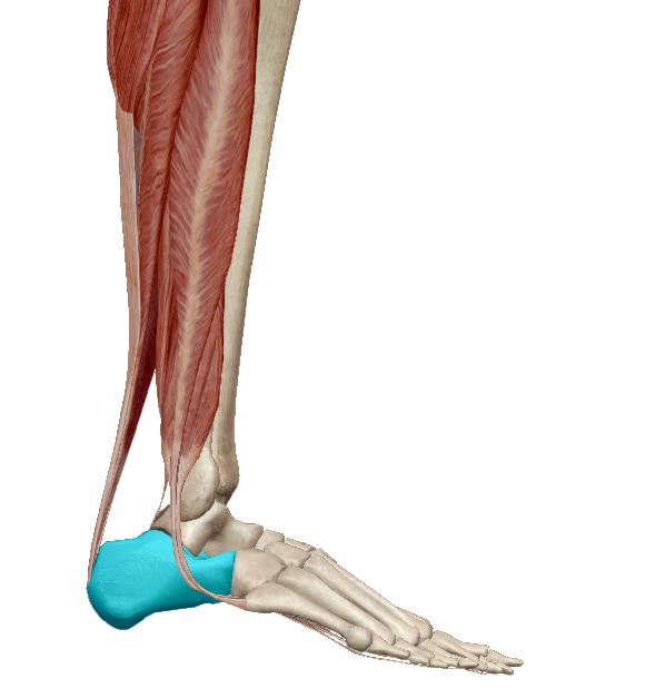 miért fáj az ízületek és repednek a csontok