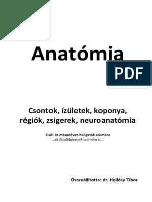 clavicularis ízület és annak betegségei)