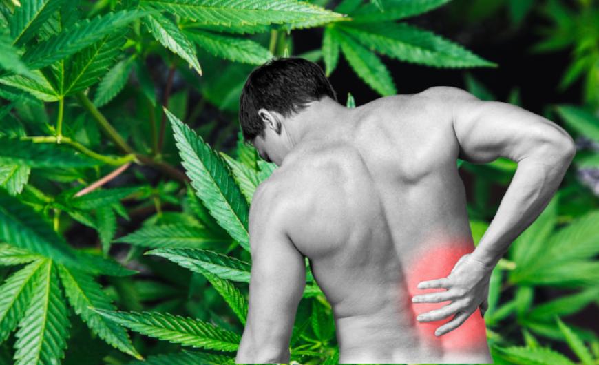 Krónikus fájdalom és a CBD