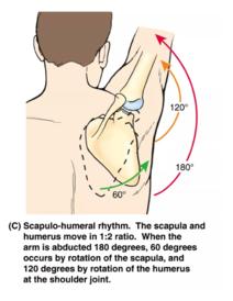 Tipp 1: Hogyan lehet megszabadulni a fájdalmaktól a karokban és a lábakban