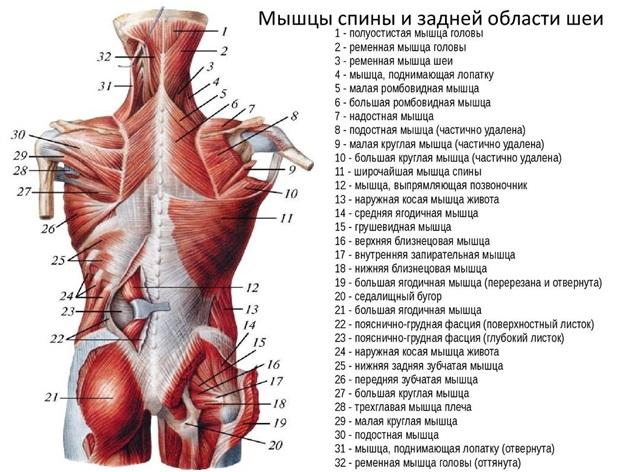 ízületek és ízületek fájdalma, oszteokondrozis)