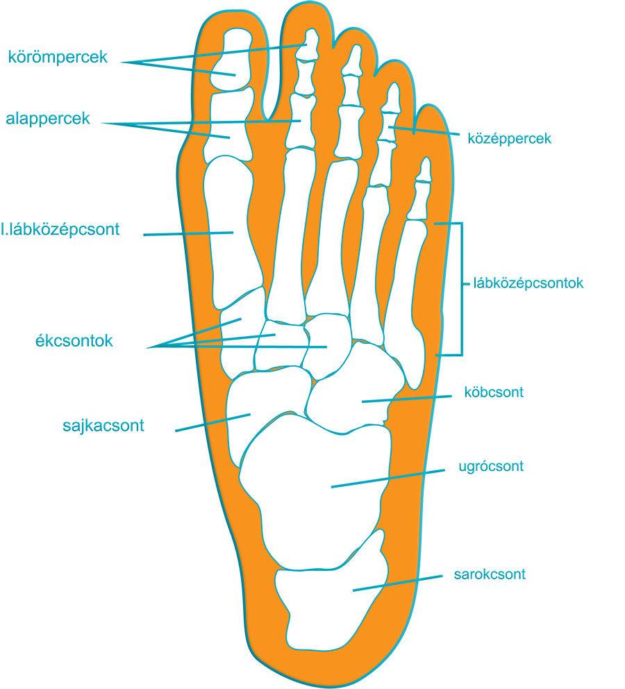 a láb futó ízületei