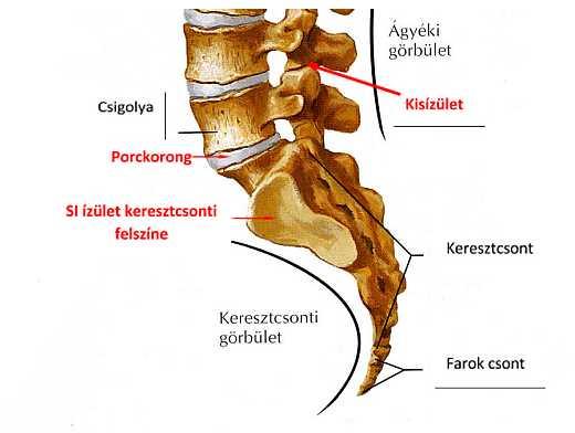 Ízületi gyulladás jelei: duzzanat a végtagokban, bizsergés a gerinc mentén