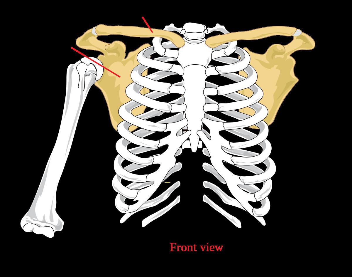 szegycsont ízületi kezelés nyaki osteochondrosis ízületi fájdalom