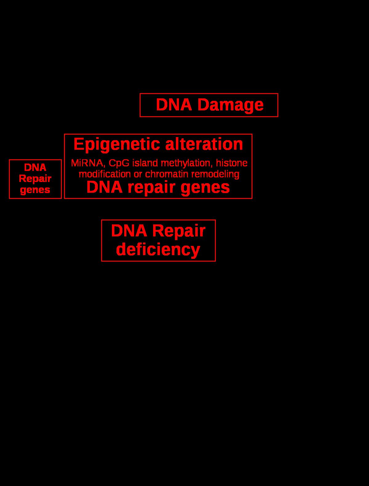 vizsgálati módszerek kötőszöveti betegségben szenvedő betegek számára echinacea gyógyító tulajdonságai ízületi fájdalmak esetén
