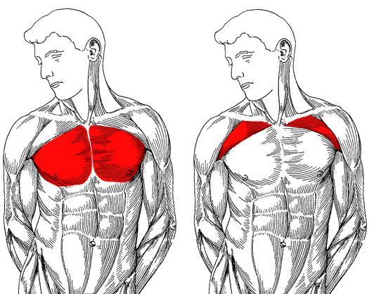 fájdalom a vállízületekben és a hát alsó részén)