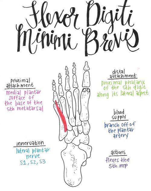 izom- és ízületi fájdalmak receptjei