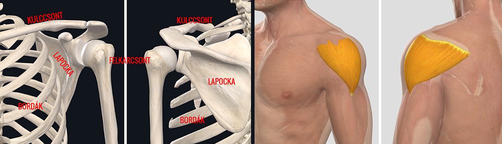 a vállízület ligamentumának gyulladása