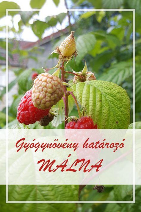 gyógynövények gyűjteménye ízületi gyulladásokra)