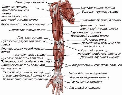 Térdizületi porc-kopás (Gonarthrosis)