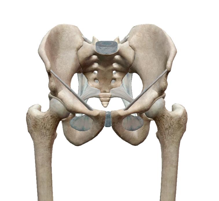 csípőízületi fájdalom, és a lábát adja