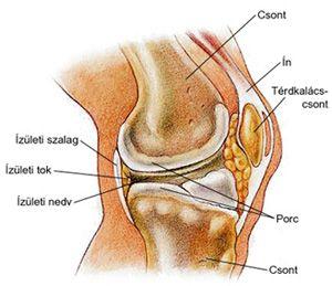 térd artrózisa a kezelésre)