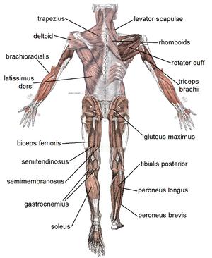 az ízületek és a kar izmai fájnak a csontokról