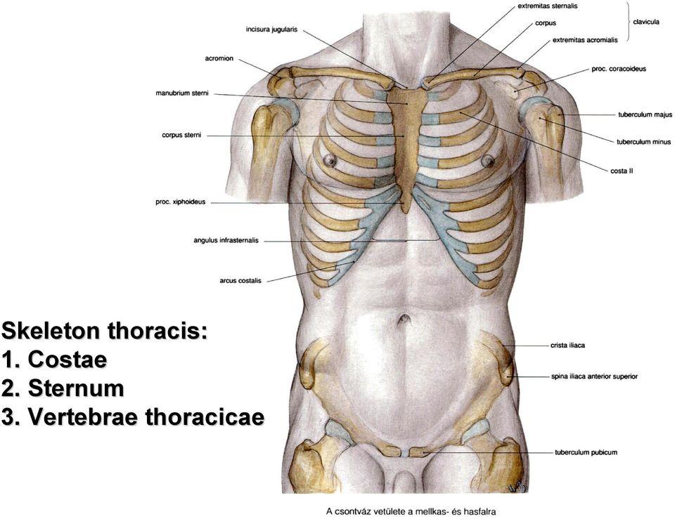 a csípőízület körüli szövetek gyulladása