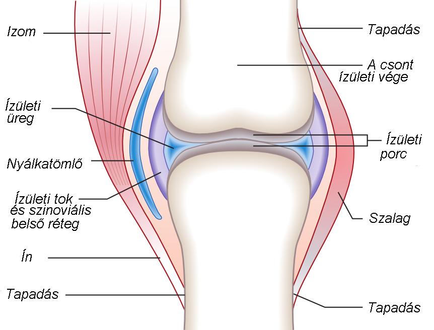 a térd artritisz jele