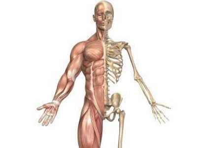csontok és ízületek gyógyszere
