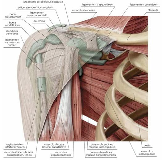 a csuklóízület deformáló artrózisa