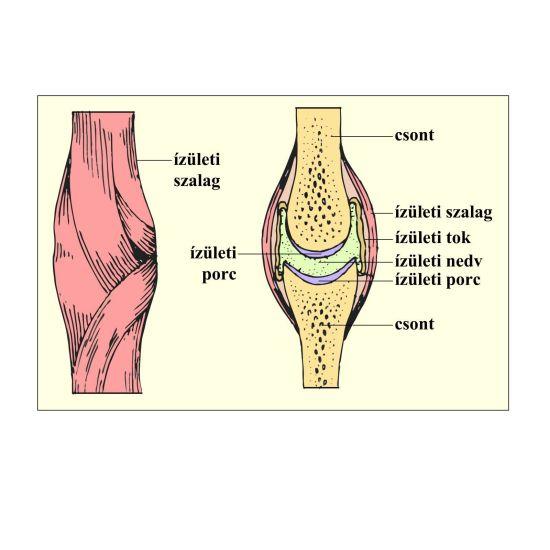 az első falanx ízület ízülete térd tünetei fertőző ízületi gyulladásai