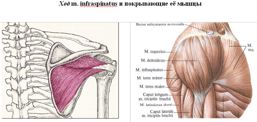 a vállízület diffúz artrózisa)