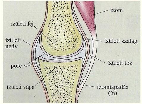 csontok és ízületek zárt sérülései csuklószindróma de cervena kezelés