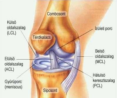 hol kell kezelni térdízületeket ízületi és lábizom-kezelés