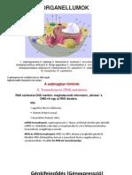 Dr. Diag - Könyökízület tuberculosisa