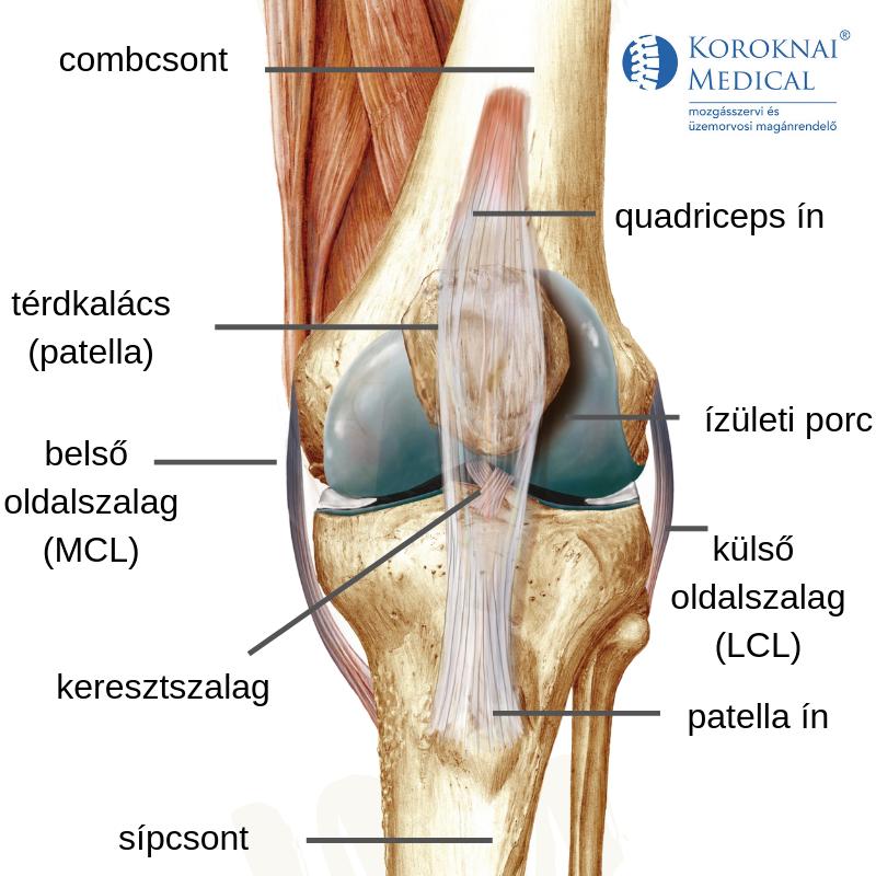 Sprainek és a csukló elmozdulása - Diszplázia