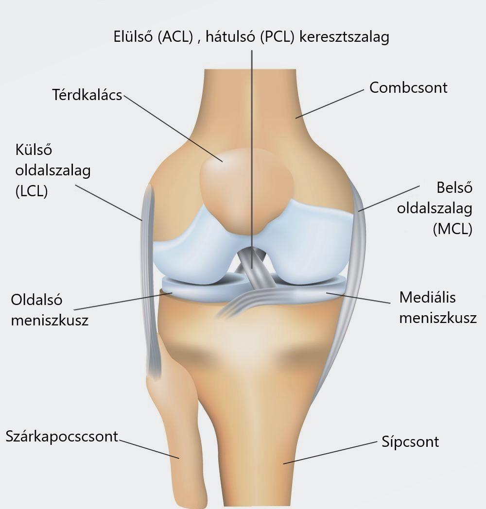 a térdízületi kezelés csípős meniszkusza