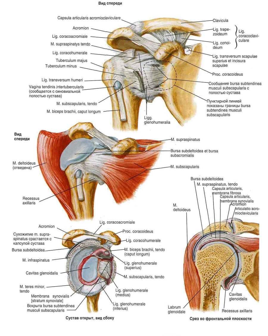 a vállízület osteoarthritis 3 fokos kezelése