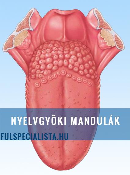manduladaganatok és ízületi fájdalom