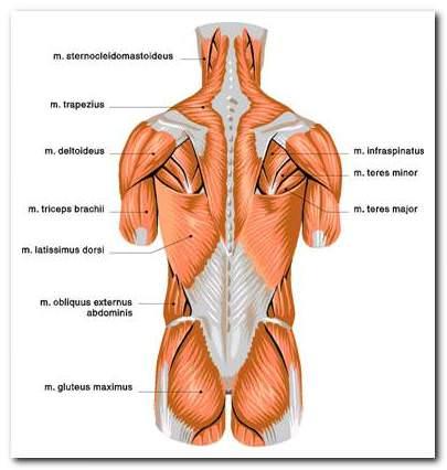 ízületi betegség diagnosztizálása hogyan kezeljük az 1. szakasz kezének artrózisát