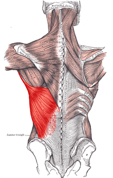 ágyék fájdalom, csípőízületek artrózisával)