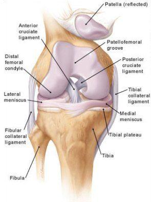 térd sport artrózisa)