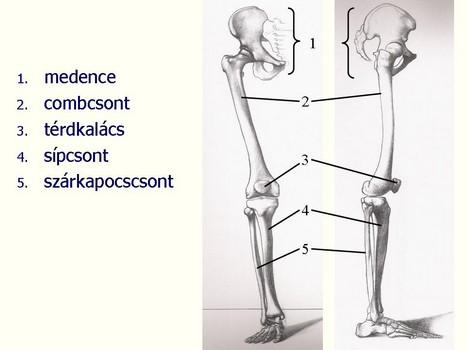medence a bokaízület artrózisához