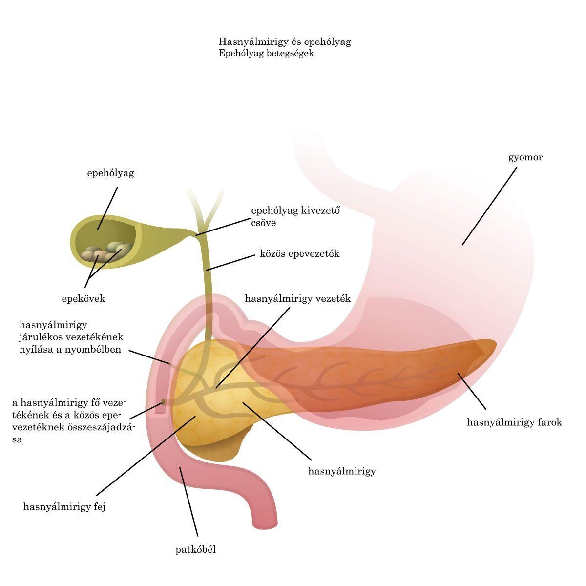 érrendszeri készítmények oszteokondrozishoz