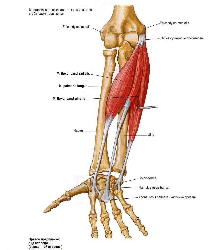 Sportolhatok-e arthrosissal?