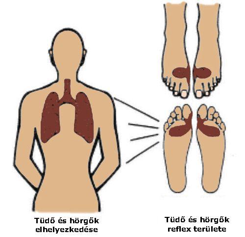 hátfájás tüdő)