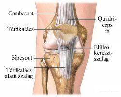 térd-lábízület kezelése