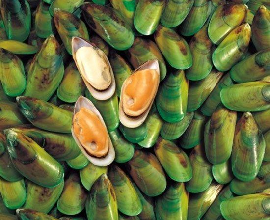 kagylókészítmény ízületekhez